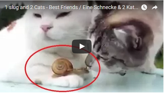 Freunde? 1 Schnecke, 2 Katzen | EIN HERZ FÜR TIERE Magazin