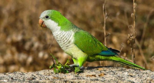 10 animales que hemos convertido en especies invasoras - EcologíaVerde