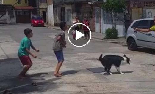 Wenn dieser Hund Kinder beim Seilspringen sieht, kann ich er sich nicht zurückhalten | EIN HERZ FÜR TIERE Magazin