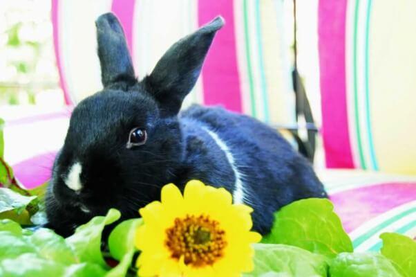 Countries Around the World Work to Ban Cosmetics Testing on Animals   Blog   PETA Latino