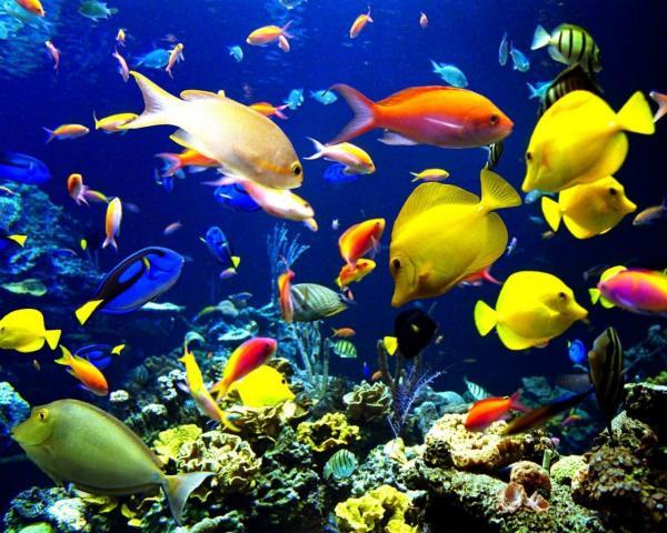 La contaminación acústica afecta a los peces - EcologíaVerde