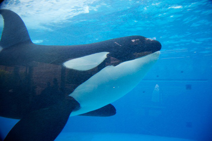 5 Videos SeaWorld Doesn't Want You to See | Blog | PETA Latino