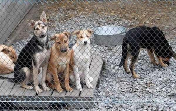 Как содержать приют для животных